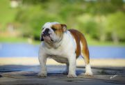 Meljane Bulldogs King George